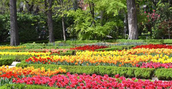 Plantación tulipanes Real Jardín Botánico/ Real Jardín Botánico