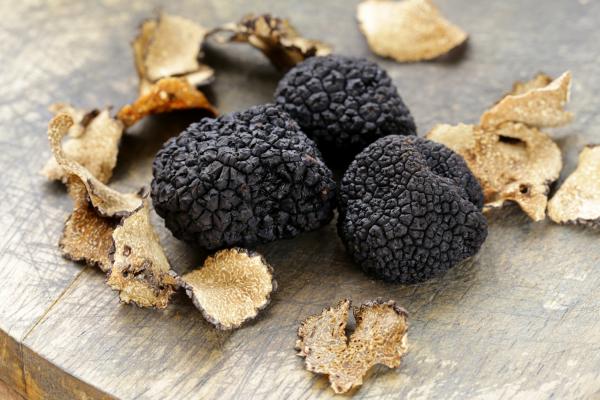 Trufa negra, el secreto mejor guardado del agro español